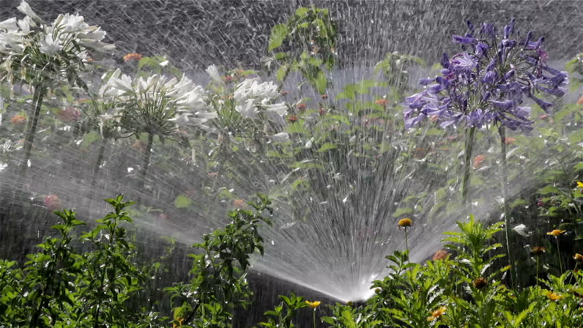 watering-flowers-sprinkler